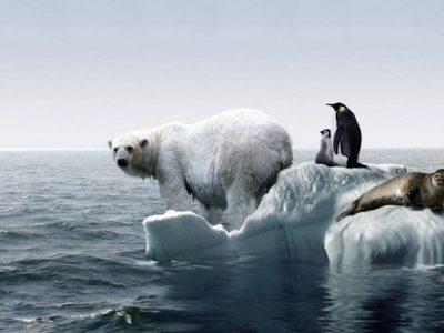 globalnoe-poteplenie-400x300 Статьи